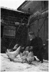 Désiré nourrit ses poules dans la neige
